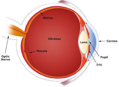 Diagram of Eye-Cornea